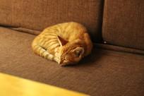 安静的小橘猫