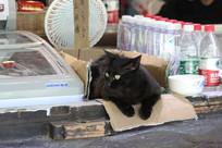 傲娇的小黑猫