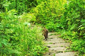 孤独的小猫
