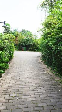 公园里的小路