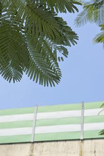 蓝天和绿植