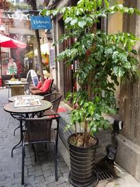 田子坊餐桌与植物