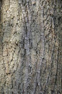 沧桑树皮纹