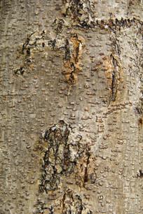 高清树皮纹