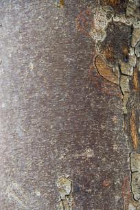静物树皮纹
