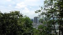 树林间看清镇城区
