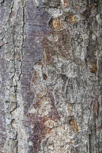 树皮纹特写