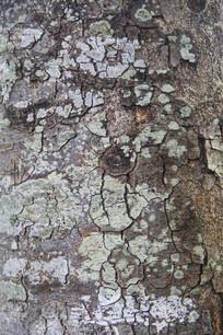 素材树皮纹