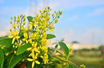一簇黄色花卉特写