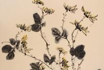 绘画作品菊花