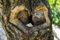 树干上的心形图案