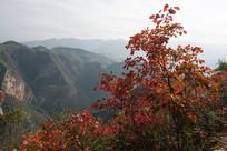 巫山黄岩景区深秋季节的红叶