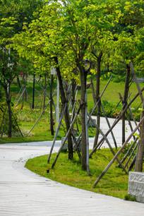 鹿江公园的S形道路