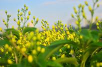 美丽的黄色花卉图片