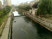清镇东门河里的绿色水藻