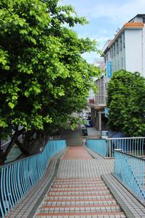 榕树与楼梯