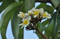 枝头上的小花