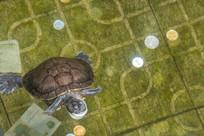 元妙观里的乌龟