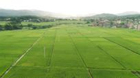 美丽的田野风景图片