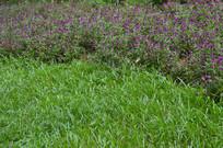 青草地与火球花