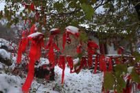 山神庙前树上的祈福红丝带
