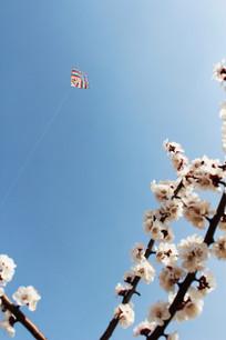 杏花上空的风筝