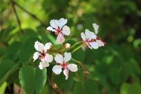 白色野生花和花骨朵
