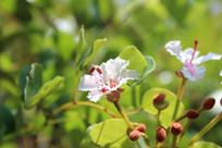 开放的白色野生花朵