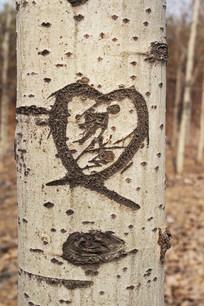 刻在杨树上的心形图案