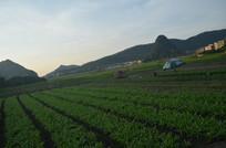 暮色田野风景图片