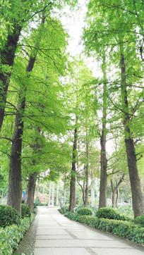 树林小路风景图片