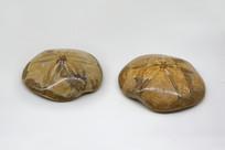 圆花海胆化石