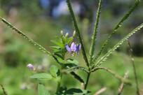 紫色小花和小草