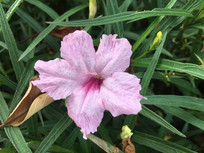 粉色花卉兰花草