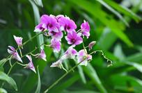 粉紫色小野花