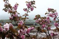 观赏花卉花朵融化时景象