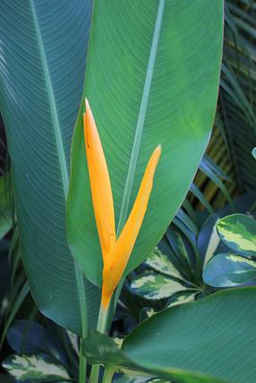 海口公园内的热带植物
