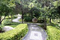 隋唐植物园里的林间小道