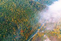 晨雾迷漫的秋季林海 (航拍)
