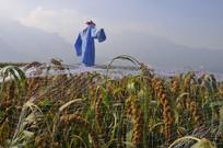 谷子地 里的稻草人