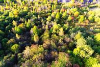 五彩森林(航拍)