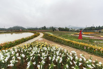 香水百合种植基地