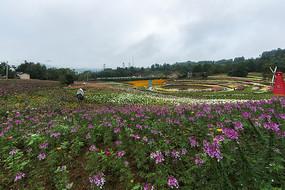 黟县叶村石林花卉