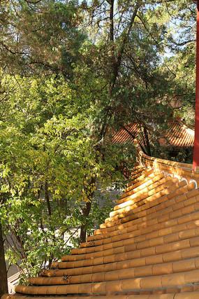 大观楼飞檐与阳光透过的树林