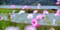 汉江边上的花卉