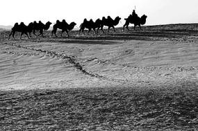 黑白骆驼队