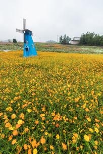 黄色的菊花与风车