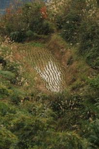 山沟里的稻田