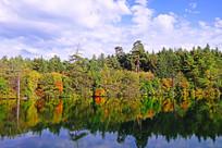五彩斑斓的湖岸森林
