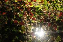 光照树叶上